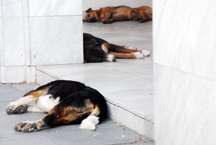 psi spas od vrućina debela hladovina